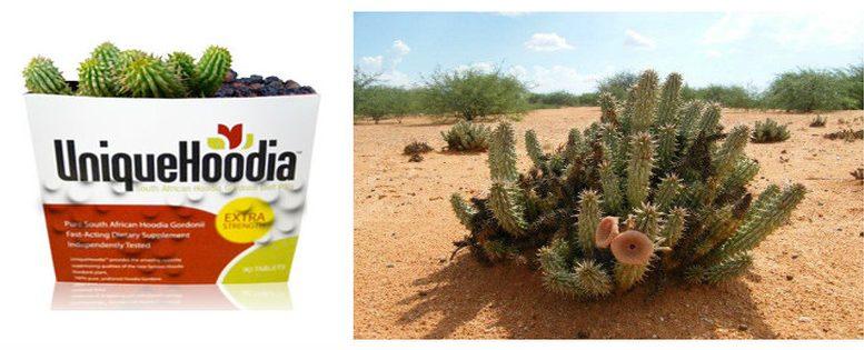 hoodia-gordonii-plante-et-complement-alimentaire