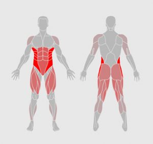 muscles-exercice-physique-pompe-cardio