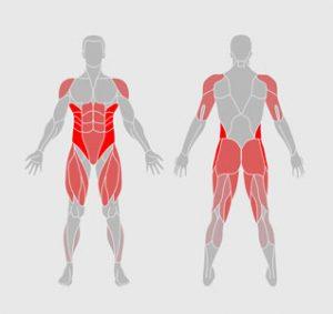 muscles-exercice-physique-cardio-sculpt