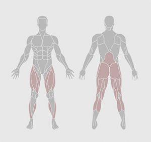 muscles-exercice-physique-rouleau-de-mousse
