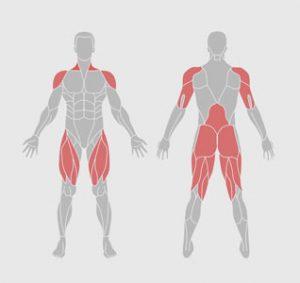 muscles-exercice-physique-etirement-du-corps-entier