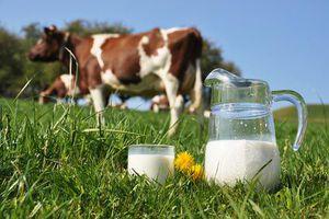 allergie-alimentaire-au-lait-de-vache