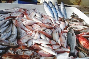 allergie-alimentaire-au-poisson